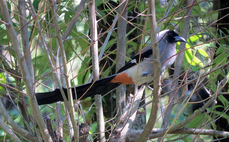 Benog Wildlife Sanctuary Mussoorie