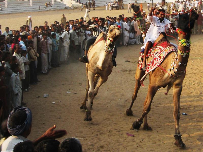 Camel Race Pushkar