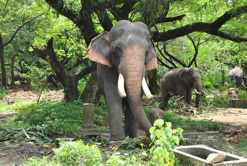 Elephant Sanctuary Guruvayur