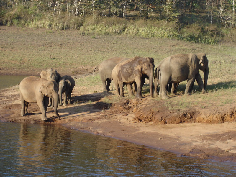 Elephants Periyar Wildlife Sanctuary