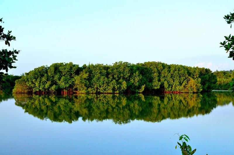Mangrove Forest Kannur