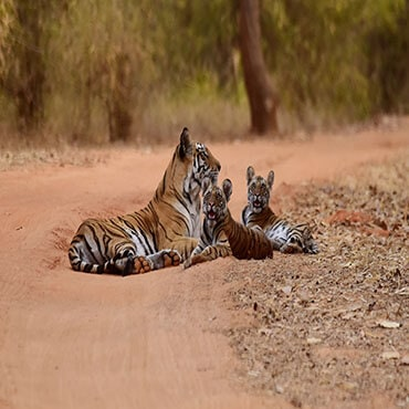 Best bandhavgarh national park tours and activities in India